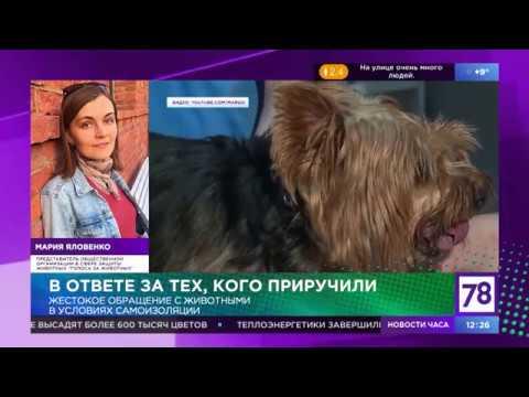 Канал 78:  Семейная программа 12+. Комментарий Марии Яловенко
