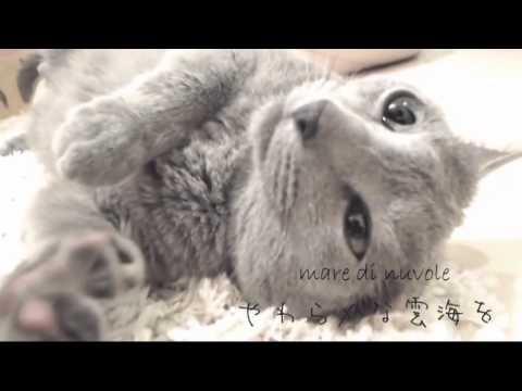 【鏡音リン∙Kagamine Rin】  わたしはねこ Watashi wa neko (Io sono un gatto) - Sub Ita 【Original Neko PV】