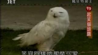 瘋狂特報王 20080512 特報排行榜19 起笑貓頭鷹