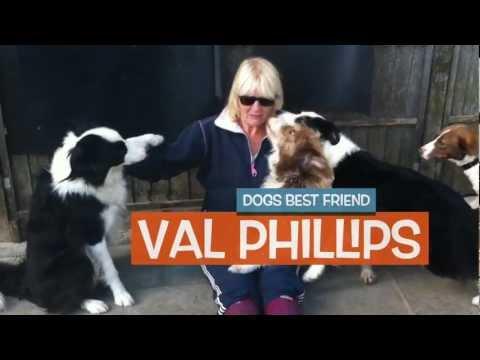 Valgrays Border Collie Rescue Trailer