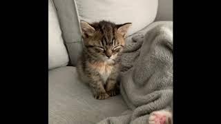 Приколы про животных Смешное видео про котов собак и не только Такого Вы еще не видели Выпуск 6