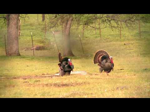 Daryle Lamonica3 Talkin Turkey