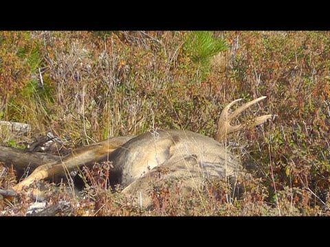 Hunting In British Columbia 2019