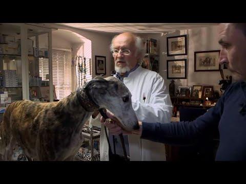 Chronischer Niereninsuffizienz Bei Hunden – Wolfsblut VeLine