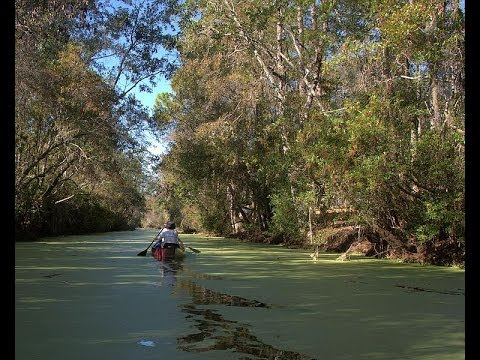 Home - Okefenokee - US Fish and