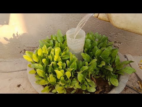 Water Saving Techniques For Kitchen Gardening