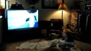 Dorito's Dog Collar Commercial Baby Laughing