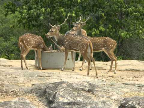 Bannerghatta National Park,attractions in Allahabad