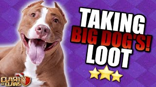 BIG DOG, BIG LOOT! TH11 Let's Play ep33 | Clash of Clans