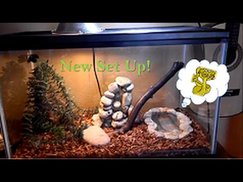 New Two Striped Garter Snake Set Up - YouTube - photo#40