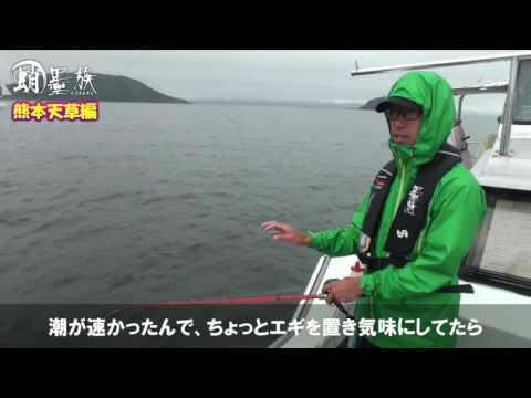 【蛸墨族】船蛸 in熊本天草編