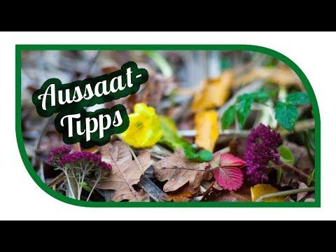 Aussaat & Gartentipps Im November 🐔 Der Vorratskeller Wird Voller ❄️Selbstversorgung Im Winter