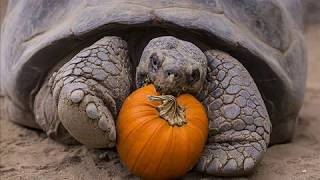 Черепаха - долгожитель