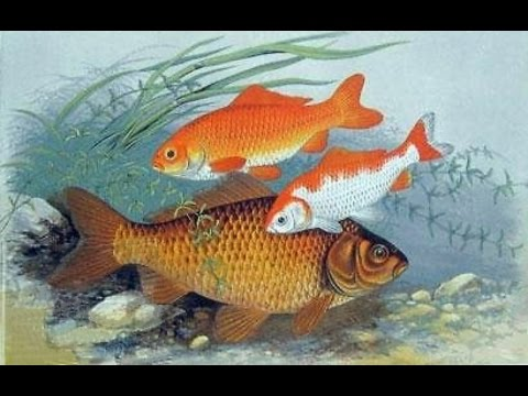 The fish in water videos fish moving in water - YouTube