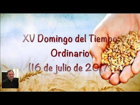 HAY QUE SER TIERRA BUENA - XV Domingo del Tiempo Ordinario (16 de julio de 2017)