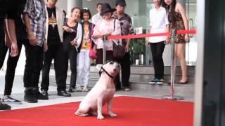Реалистичный 3D-эксперимент - собаки никогда не лгут.(Могут ли собаки смотреть видео в 3D? В этом ролике вы увидите, как четыре милых собачки - золотистый ретривер,..., 2012-07-17T15:13:59.000Z)