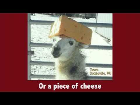 The Alpaca Song (Alpaca Paca Pwaa!)