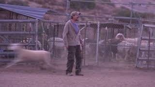 David Lee Roth Rocks the Flock with Herding Dogs | Video