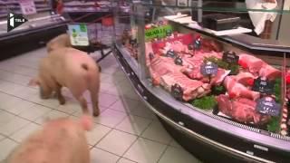 Quand des cochons se promènent au rayon charcuterie