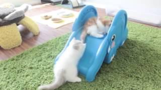 Котята экстремалы)extreme kittens.