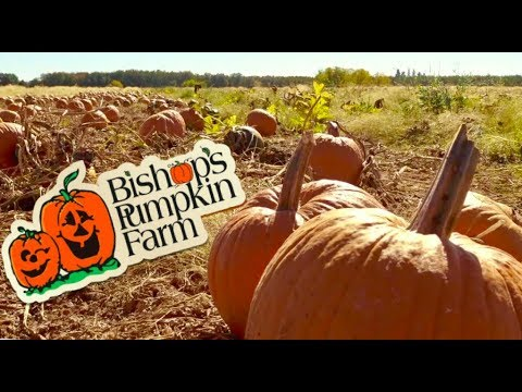 🎃 Bishop's Pumpkin Farm Attractions & Tips 🎃