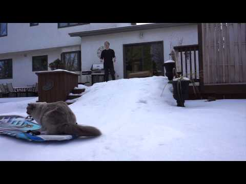 sledding with the cats