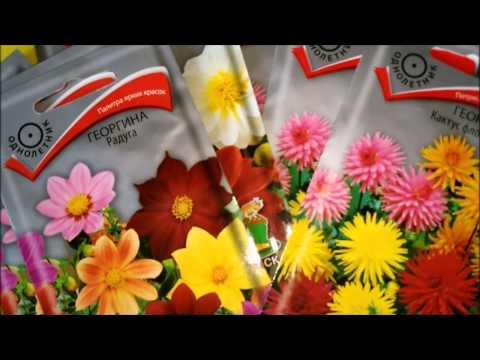Вопрос: Можно ли в конце апреля сеять георгины Если посеять, когда зацветут?