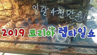 2019 코리아 렙타일쇼 KOREA REPTILE SH…