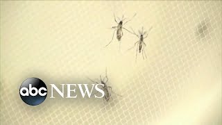 rare-dangerous-mosquito-borne-illness-kills-2-michigan