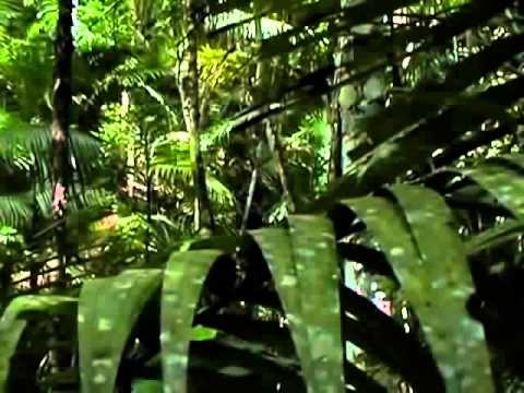 BBC documentary 2014 Spider Power Nature Documentary