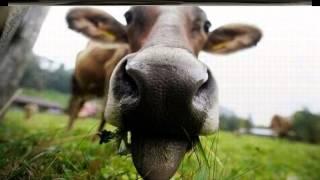 смешное фото животных, смешное видео с животными.
