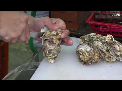 Oysters in Okinawa Street Food in Japan