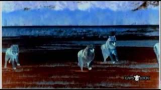 Capslock - Le Pacte Des Loups [ break / acid / flash / core - released on BM006 ]
