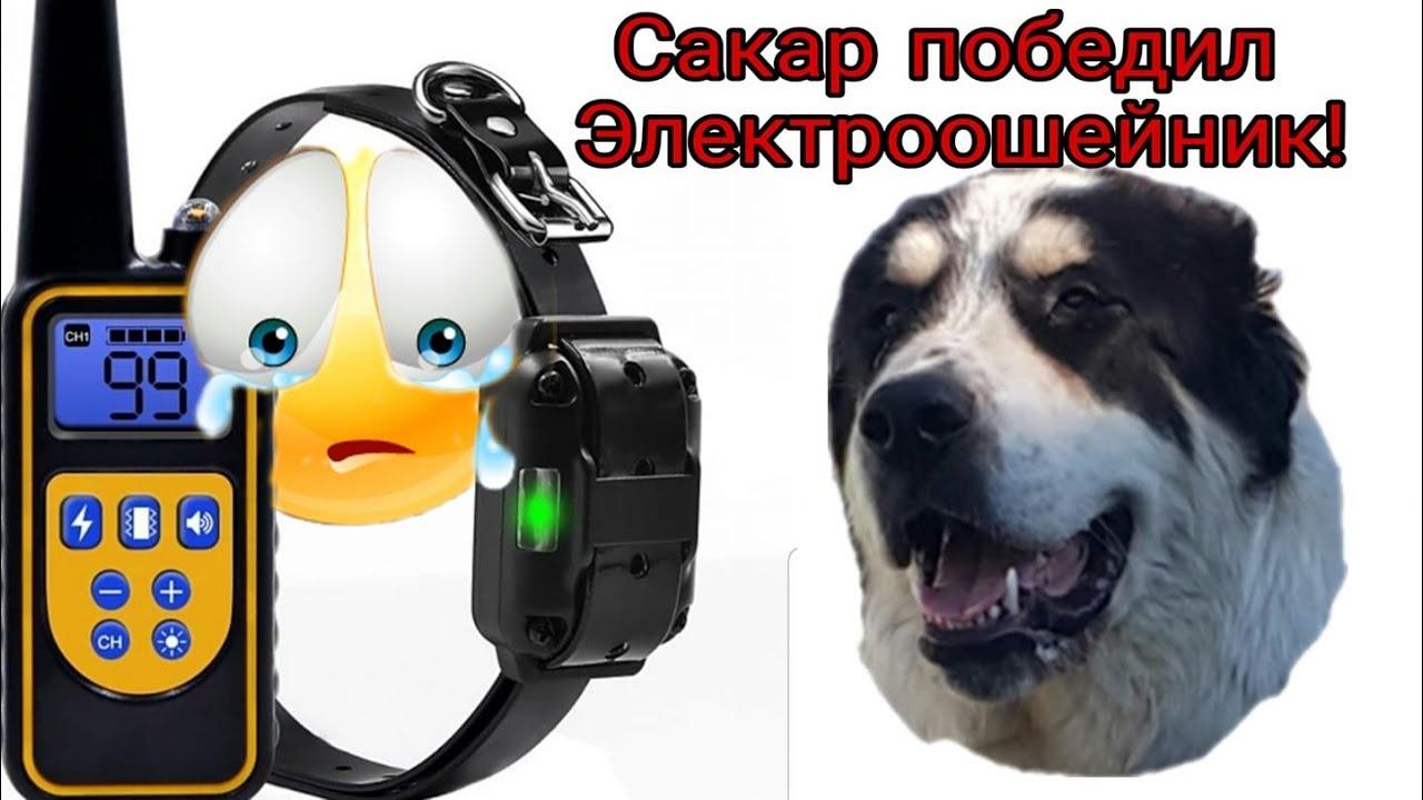 Сакар победил Электроошейник!)