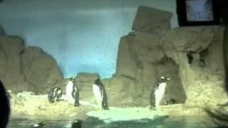 Genova aquario 1. Генуя аквариум.(аквариум в Генуи. Действительно стоит посетить крупнейший в Европе морской зоопарк Аквариум в Генуе. Он..., 2010-12-06T23:59:48.000Z)