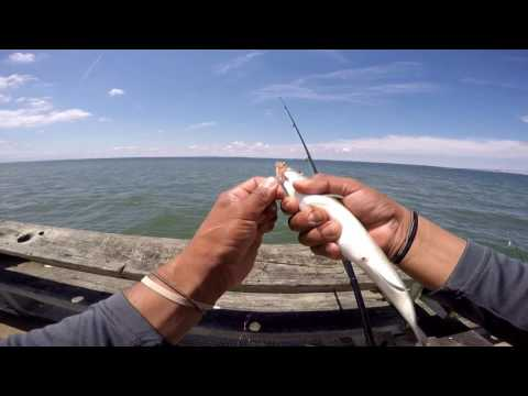 Fishing At Bill Burton Pier (Cambridge Md) And Matapeake Pier  For Striped Bass