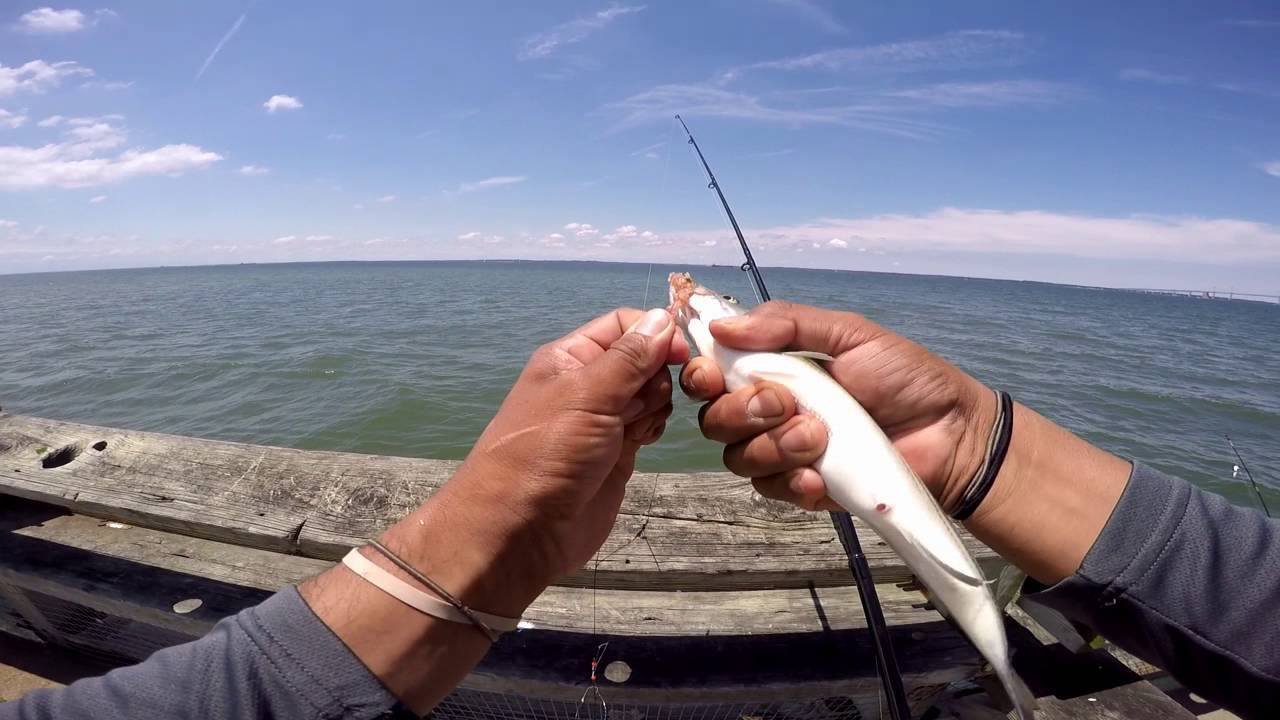 Fishing at bill burton pier cambridge md and matapeake for Md fishing report point lookout