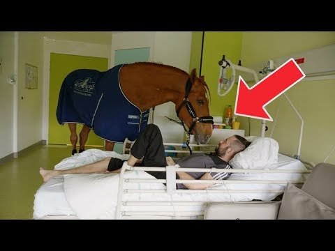 Pferd läuft an Weihnachten in ein Krankenhaus! Niemand hätte gedacht, was es dort macht!