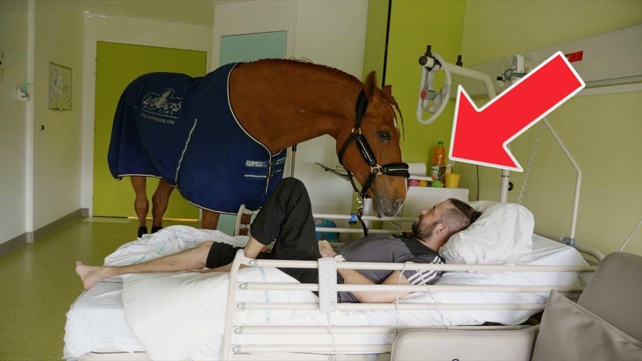 pferd l uft an weihnachten in ein krankenhaus niemand. Black Bedroom Furniture Sets. Home Design Ideas