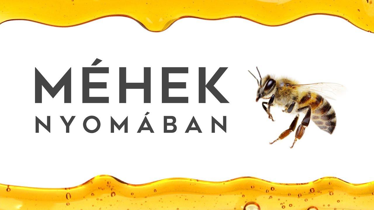 Mi a méhek látványa - erőszak, a látvány, méh | Pikist