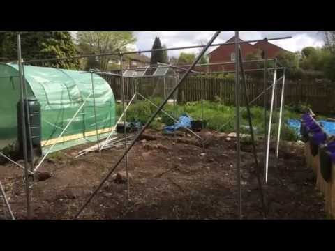 6th May 2014 Kay's allotment with fruit cage, tobacco and beer bottle up cycle