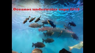 Oceanos underwater expo 2019 | underwater tunnel aquarium | Trivandrum