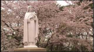 厳律シトー会天使の聖母函館トラピスチヌ修道院の桜 ...