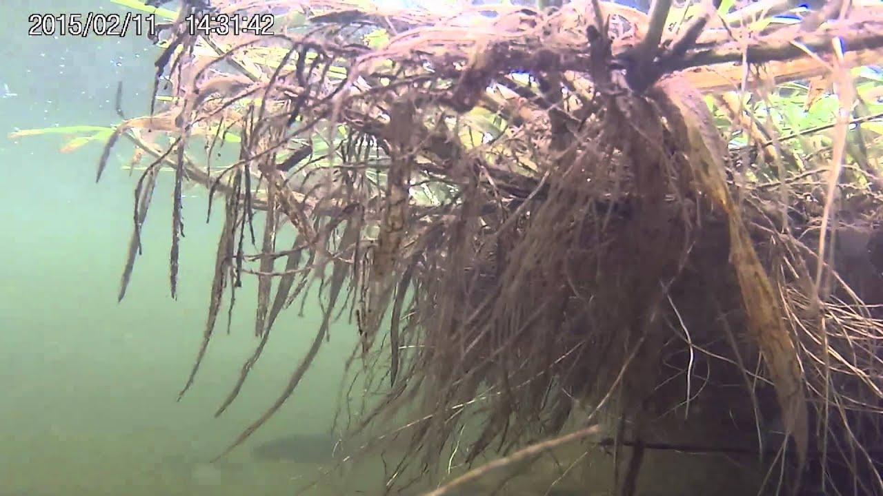 Teichfische youtube for Teich fische winter