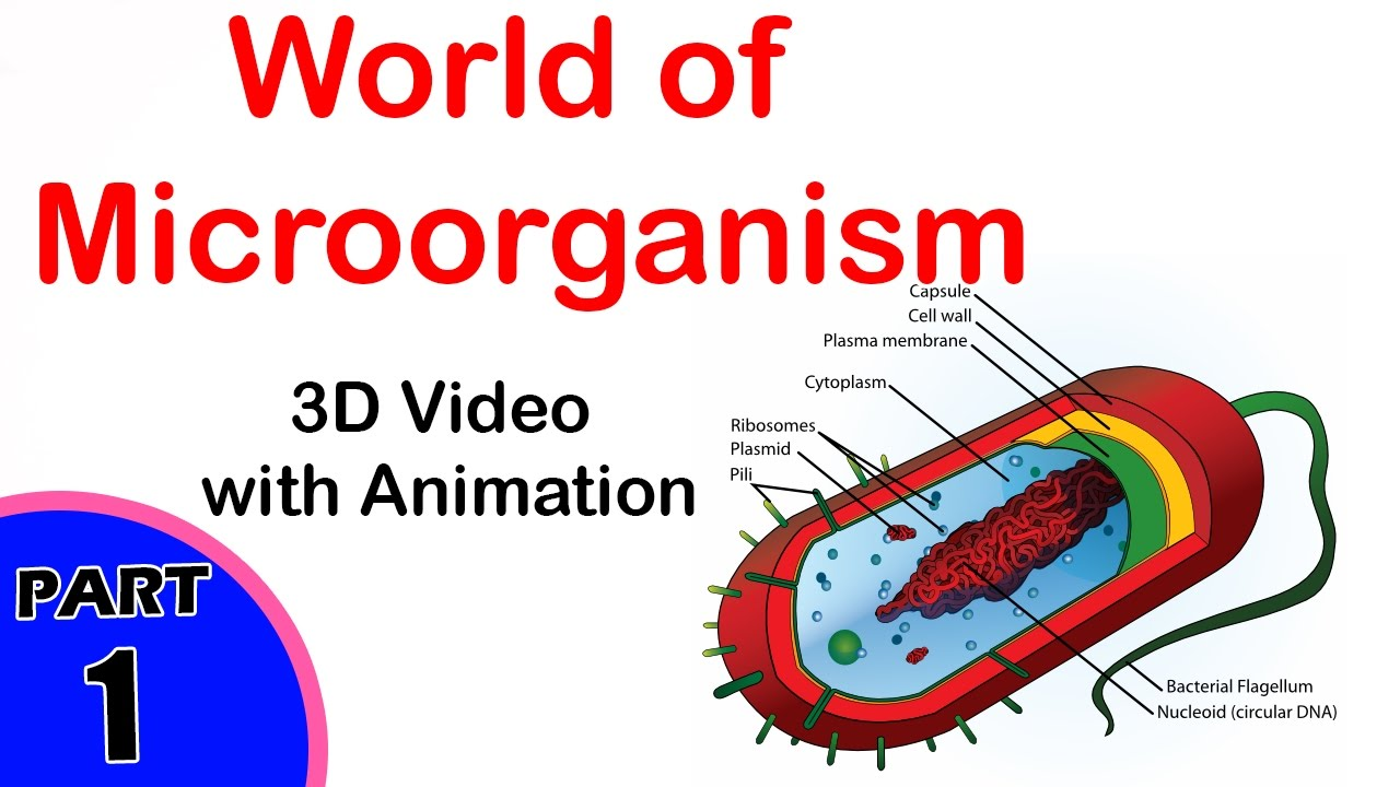 microorganisms world of microorganisms 8th class