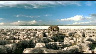 The Future is Wild - EP 3: The Vanished Sea (Legendado PT-BR)