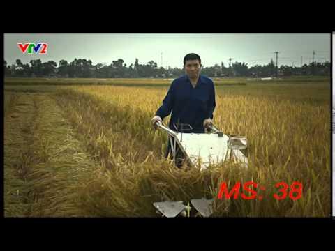 MS38-Máy gặt lúa gom thành gồi