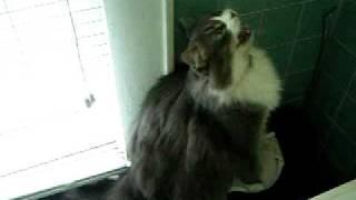 Squeekie Cat !