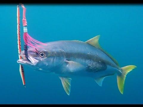 Kingfish Jigging 100115