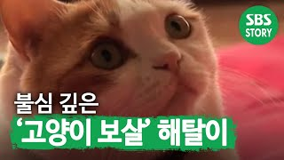불심 깊은 '고양이 보살' 해탈이 I TV동물농장 (A…